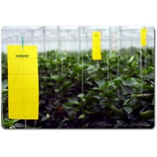 Yellow Sticky Insect Traps, 10x25cm, 10 pieces