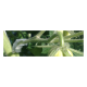 Clip for molding plants, 25 pcs.