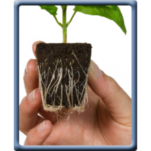 Root Riot, Organic Plant Starter Cubes, 1 Cube