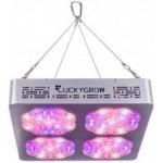 Lucky Grow LED